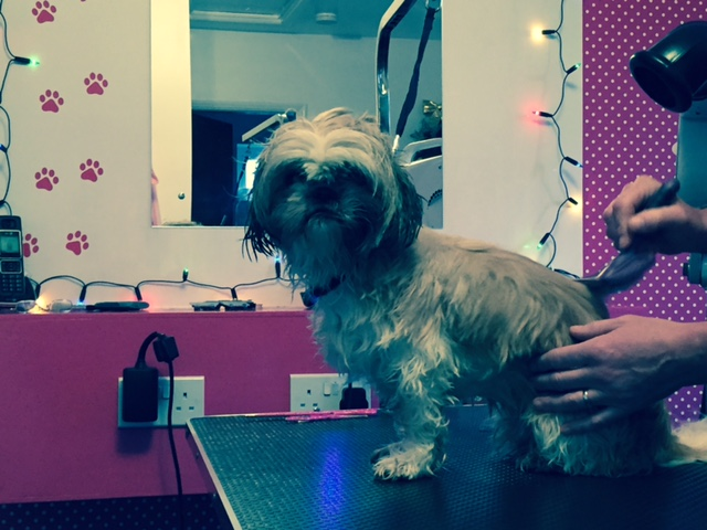 Grooming Hair Off The Dog Dog Grooming Fulstow Grimsby